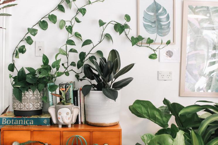 As plantas que melhoram (e pioram) a energia da casa segundo o Feng Shui