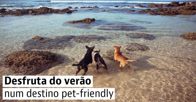 4 destinos de praia para ir com cães em Portugal